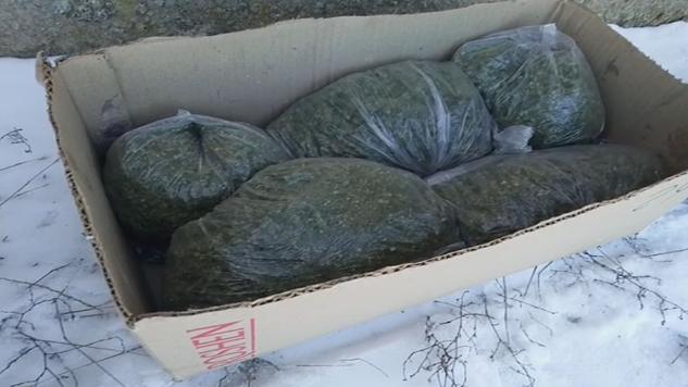«Хорошая» и «Супер»: за 4,5 кг конопли жителю Николаевщины грозит до 12 лет тюрьмы