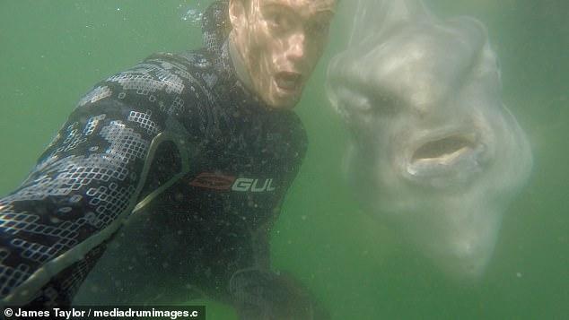 Добродушное чудовище. Дайвер наткнулся на огромную рыбу-луну. Оба остались довольны