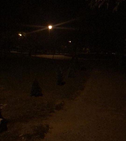 Воры никак не угомонятся. Из Парка Героев возле николаевской школы №22 выкапывают туи