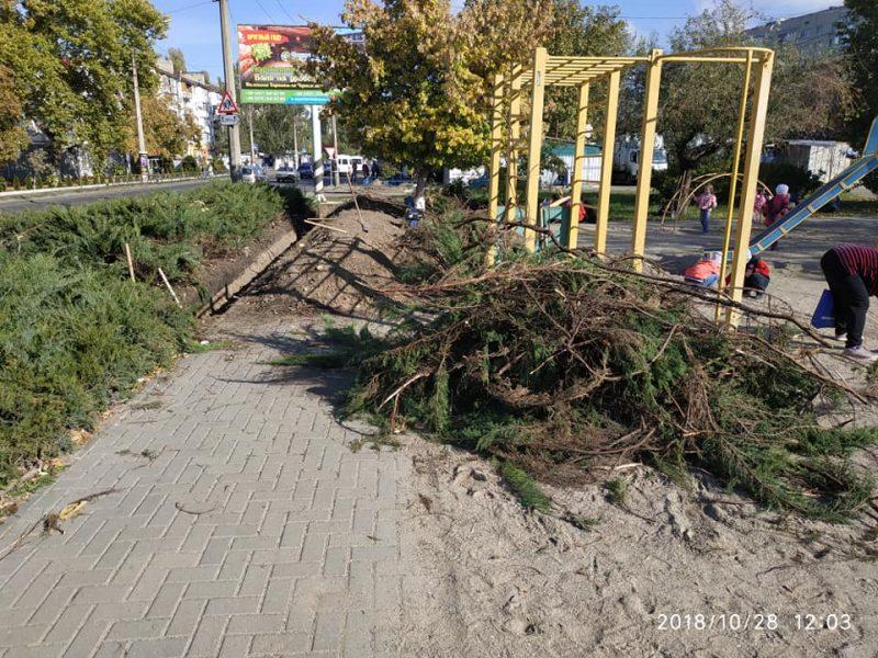 При прокладке кабеля в сквере Заводского района рабочие уничтожили многолетние кусты можжевельника