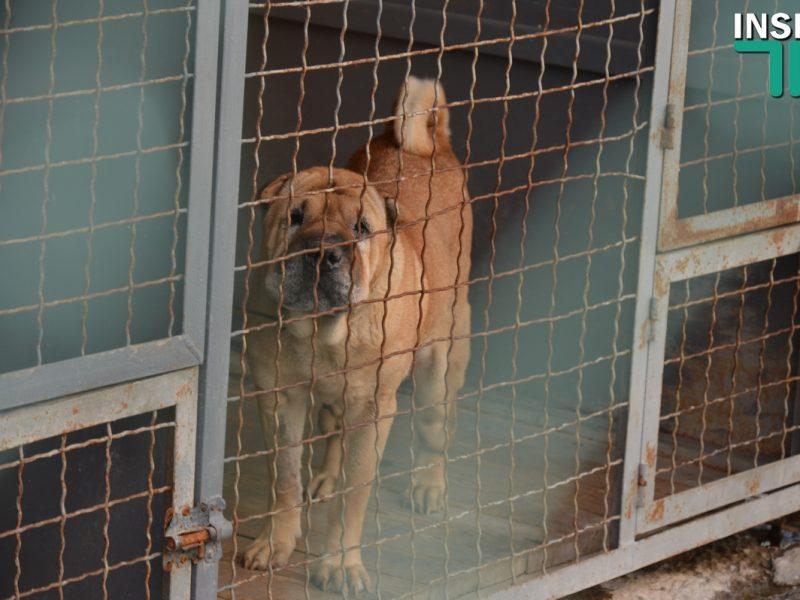 Голобродский: В депутатском варианте Программы по бездомным животным есть коррупционные риски, расточительность и наглость