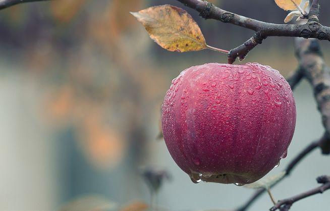 Заморозки и засуха привели к дефициту качественных украинских яблок