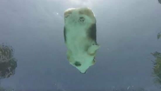 Вид снизу: заплыв грациозного корги стал хитом YouTube