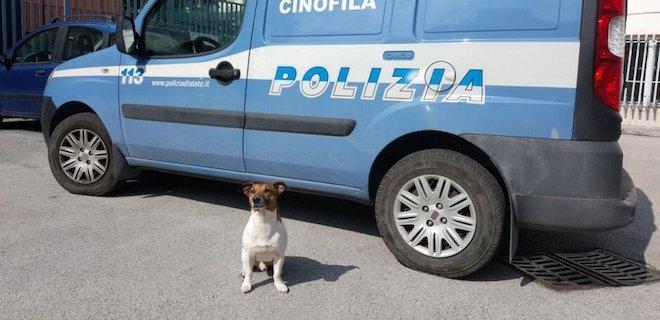 В Италии мафия заказала полицейского пса