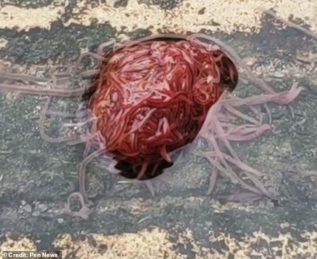 В Техасе мужчина обнаружил «канализационного монстра». Ученые говорят, что ничего страшного