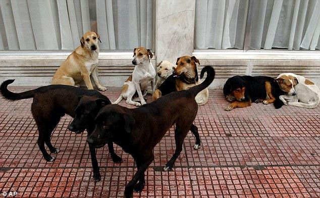 В Египте анонсировали отправку 4100 бродячих кошек и собак за границу