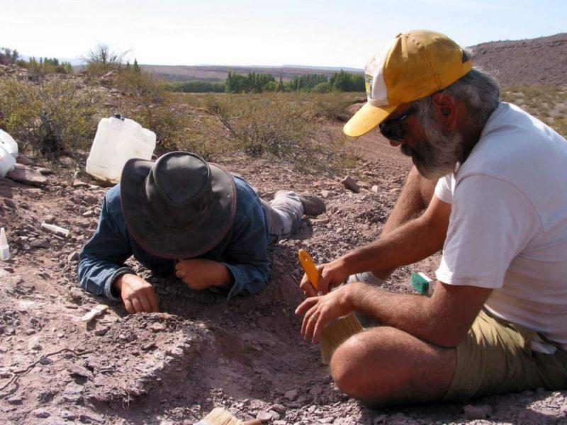 И снова Аргентина: палеонтологи обнаружили останки неизвестного ранее динозавра, который жил 110 миллионов лет назад