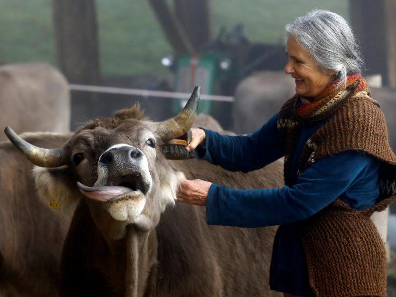 Оставлять ли рога коровам: Швейцария решает судьбу скота на референдуме