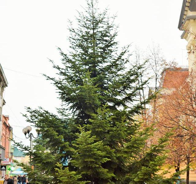 На Закарпатье уже установили первую новогоднюю елку – нарядят ее к воскресенью