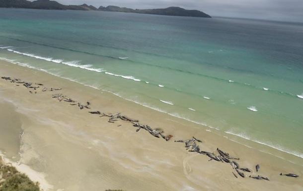 На берег Новой Зеландии выбросились около 150 дельфинов