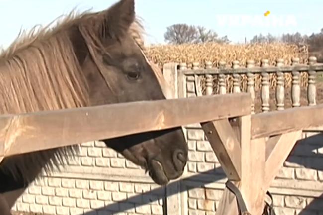 Когда защита животных – это вся жизнь: черниговская семья переехала в село ради четвероногих подопечных