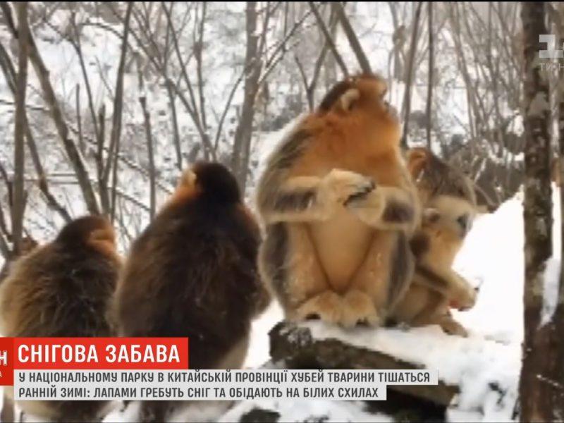 Забава для пушистых: обитатели китайского зоопарка порадовались первым снегопадам