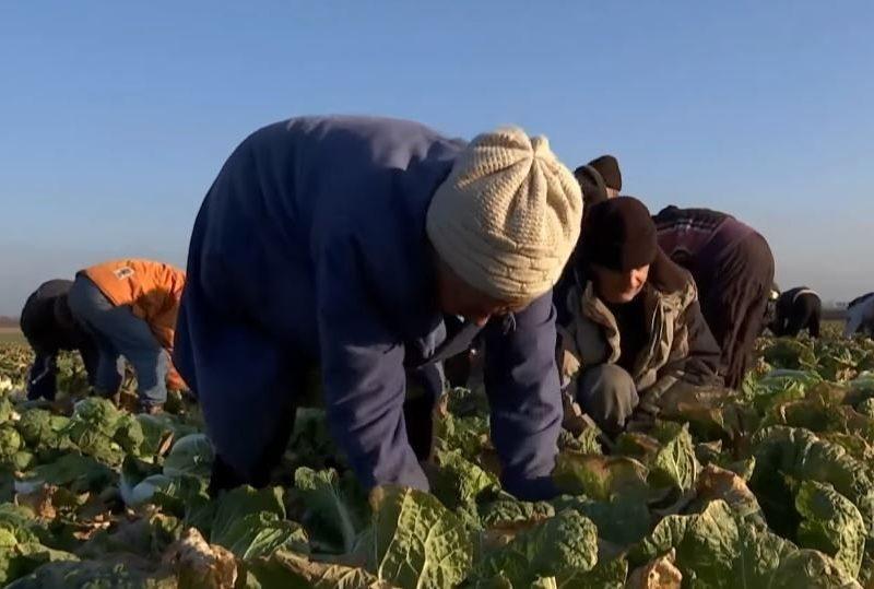 Сумасшедшие деньги. Новосозданные фермы могут получить по 5 тыс.грн. на 1 га от государства – на развитие