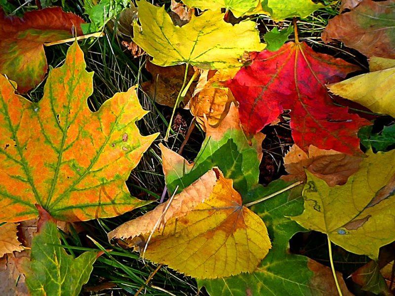С 5 ноября в Николаеве заработала свалка опавшей листвы