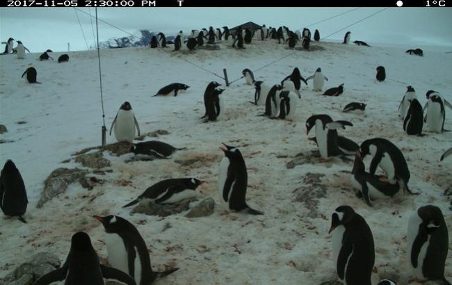 Украинские дети помогут считать пингвинов Антарктики