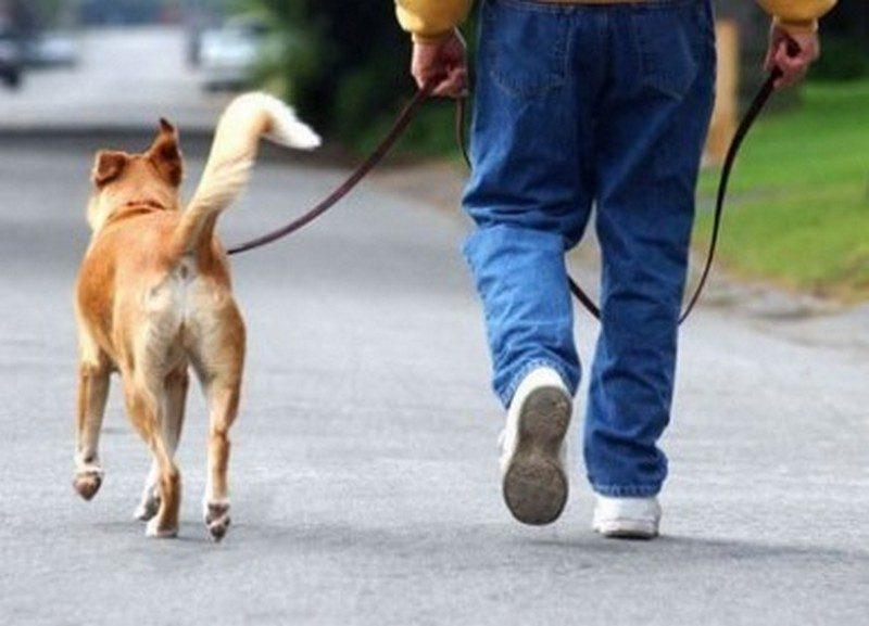 Мэр французского города запретил собакам долго лаять