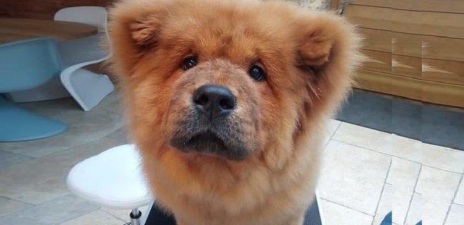 В Великобритании арестовали щенка-миллионера за нападение на полицейского
