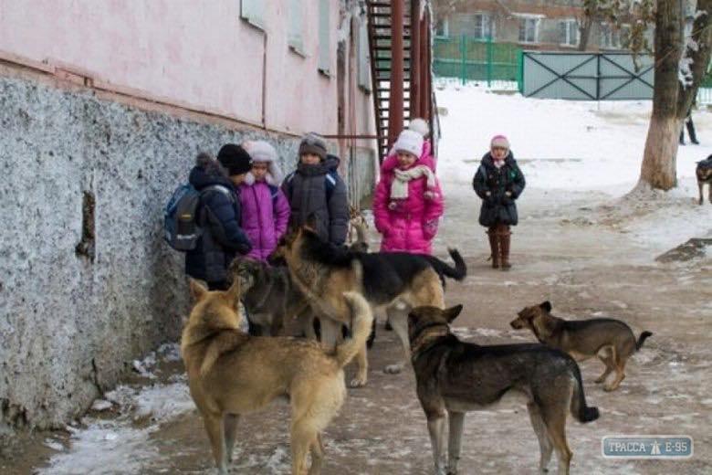 В Николаеве бездомная собака покусала 10-летнего ребенка