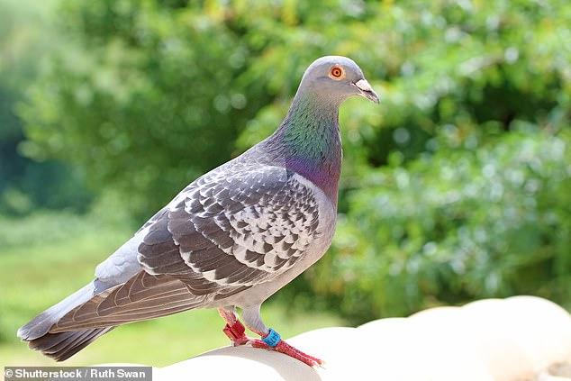 Чиновники испанского города переселят 5 тысяч голубей в сельскую местность, потому что житья от них нет