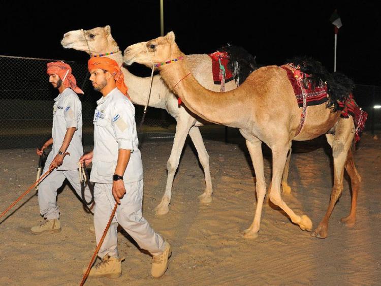 По городам и пустыне. В Эмиратах полиция пересела на верблюдов