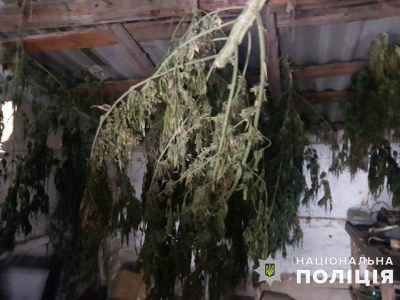 У двух жителей Баштанского района полиция Николаевщины изъяла почти 9 кг конопли