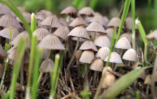 Кому-то и глобальное потепление в кайф: в Британие из-за повышения температуры вдвое увеличился сезон галлюциногенных грибов