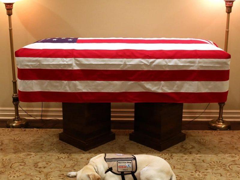 «Миссия завершена». Пес Джорджа Буша-старшего трогательно попрощался с ним у гроба