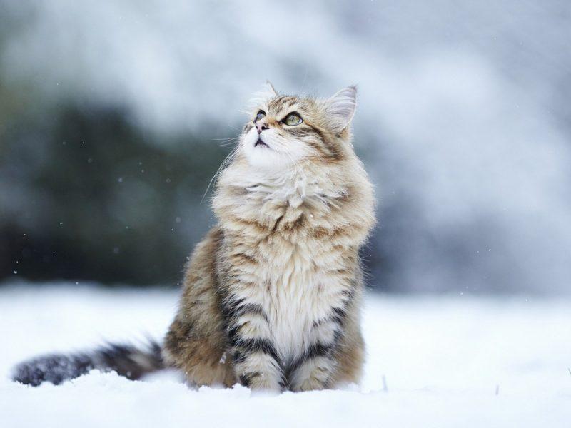 Завтра в Украине без существенных осадков, температура до +3