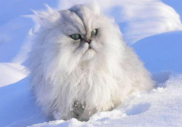 Завтра в Украине дожди и мокрый снег, температура до +5