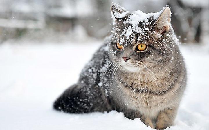 Завтра в Украине небольшой снег с дождем, температура до +6