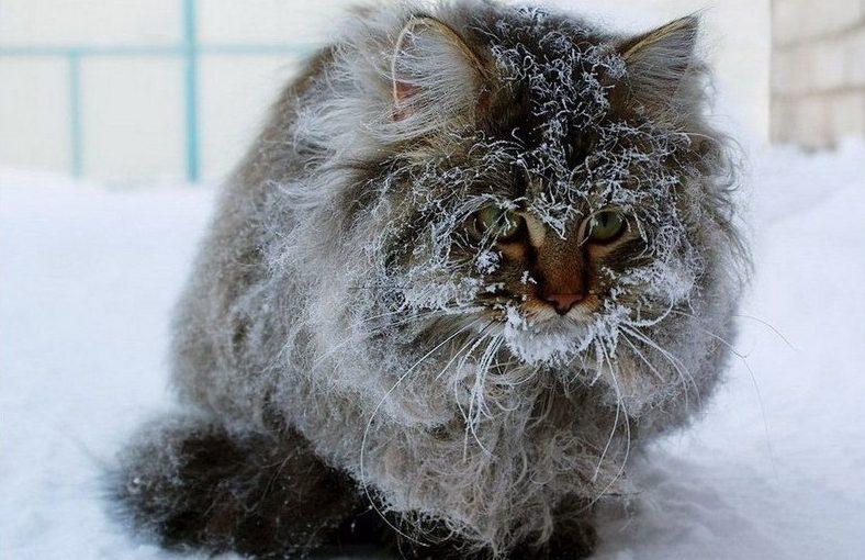 Суровая зима с экстремальными морозами: синоптики дали прогноз на три дня