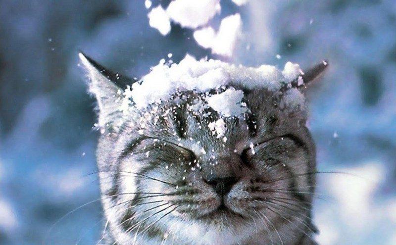 В ближайшие двое суток в Украине – снег и мокрый снег