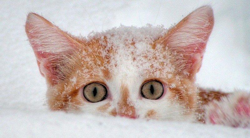 Завтра в Украине без существенных осадков, на дорогах гололедица, температура до -7