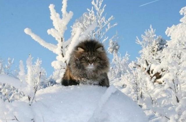 В ближайшие дни в Украине ожидается снижение температуры и мокрый снег