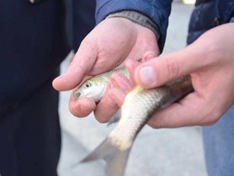 Ушла на дальний кордон? На Николаевщине за прошлый год рыбы добыли на 35% меньше