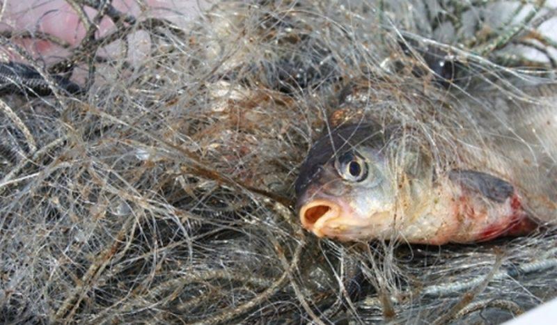 На Николаевщине разоблачили браконьеров, которые в нерест ловили рыбу запрещенными орудиями