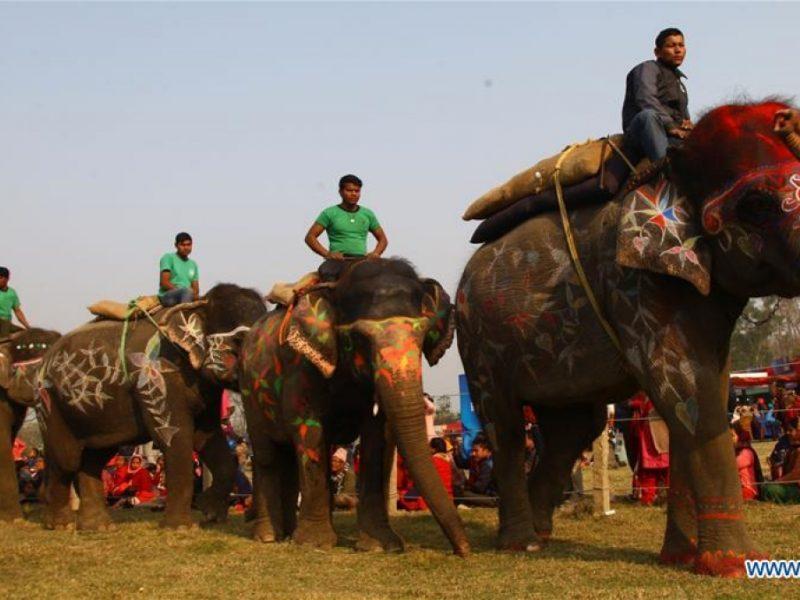 В Непале состоялся конкурс красоты слонов