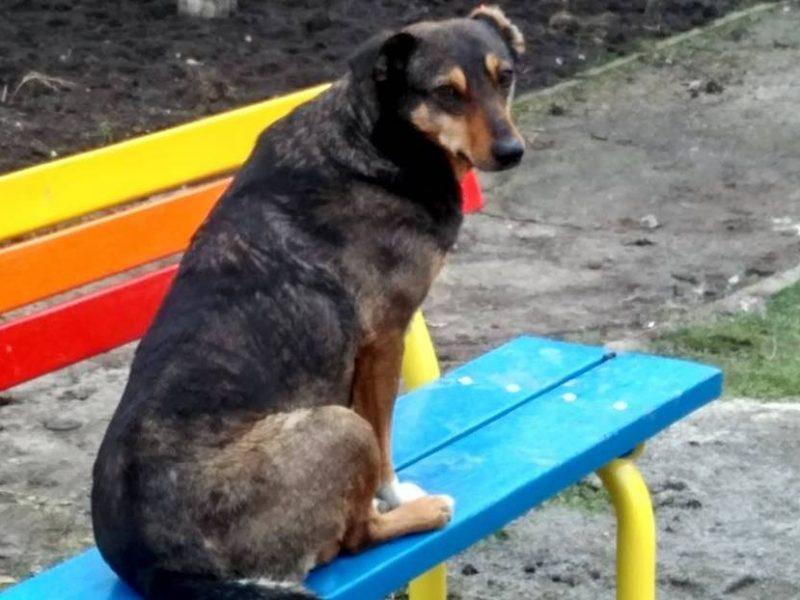 В Николаеве полиция составила протокол на хозяев собак, которые выпускали их гулять самостоятельно и позволяли нарушать правила благоустройства