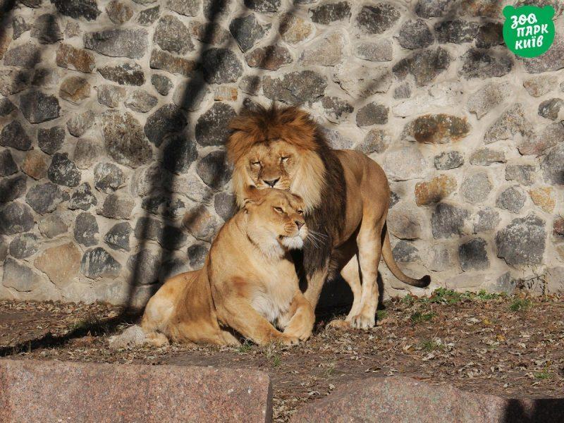 Киевский зоопарк показал, как животные отмечают День объятий