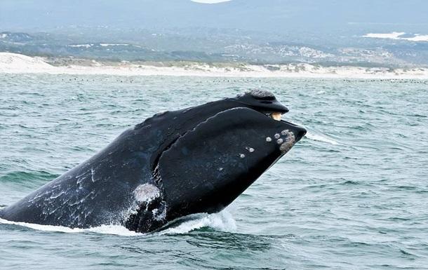 Ученые получили уникальное видео новорожденного кита