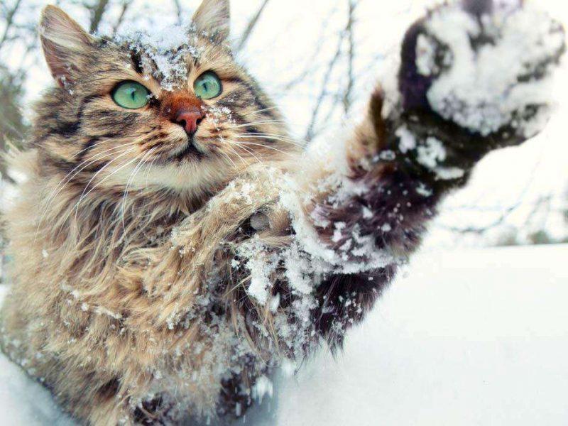 Синоптики рассказали, где будет снежно на Новый год