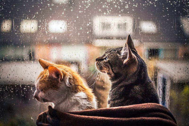 Завтра в Украине местами небольшой дождь, температура до +11