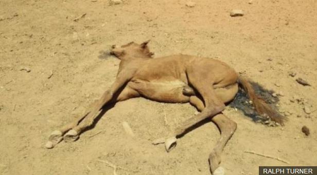 В Австралии из-за экстремальной жары погибают дикие лошади