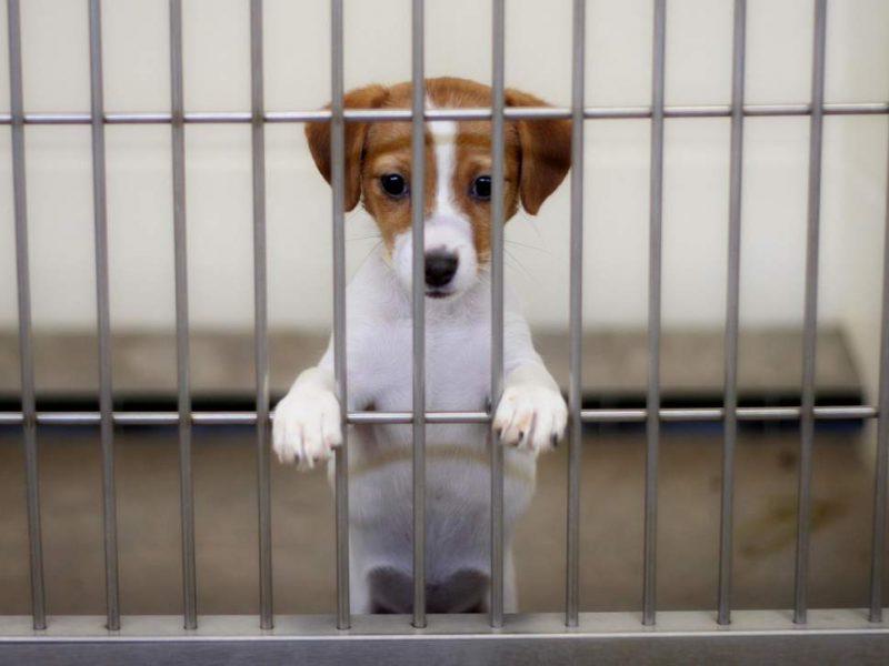 Женщина заморила голодом более 20 домашних животных, которых ей отдавали люди