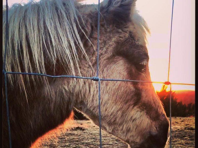 Не только дневные, но и ночные «покатушки»: в США корги ездит верхом на пони
