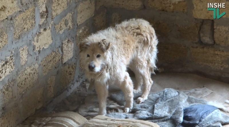 Жители «Леваневцев» устали от трех незаконных приютов николаевской зоозащитницы Шуст