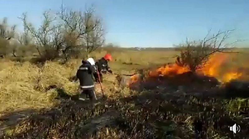 Под Гурьевкой горит почти 5 га камыша. Спасатели уверены, что его подожгли специально