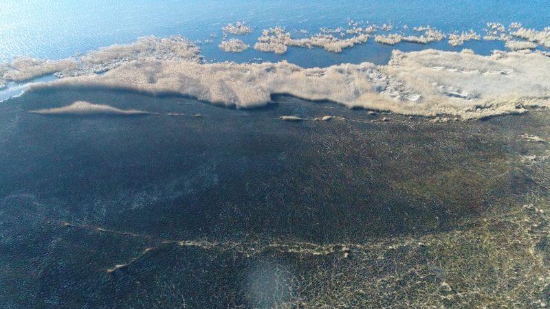 Подожгли: вчера в Николаеве горел камыш и в парке «Лески»