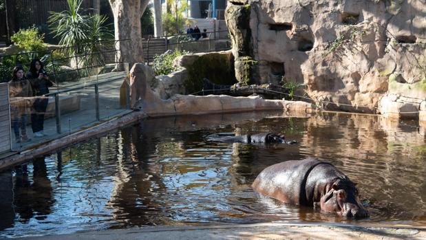 Мэрия Барселоны рассматривает вариант убрать экзотических животных из городского зоопарка