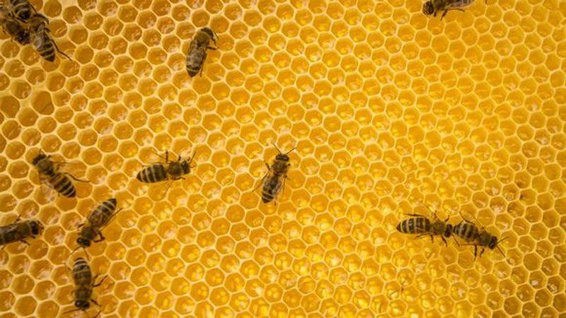 В Финляндии хотят вывести морозоустойчивых пчел